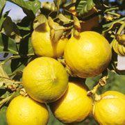 FARFALLA Bergamotte bio, 50ml